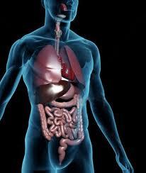 metabolism Как да задържим метаболизма си бърз през зимата?