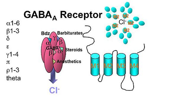 gaba efekt GABA   функции и ефект