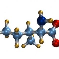 BCAA – незаменими аминокиселини