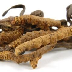 Кордицепс (Cordyceps) – билка за лечение на стрес