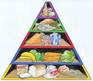 protein rich food Протеин   всичко за протеините