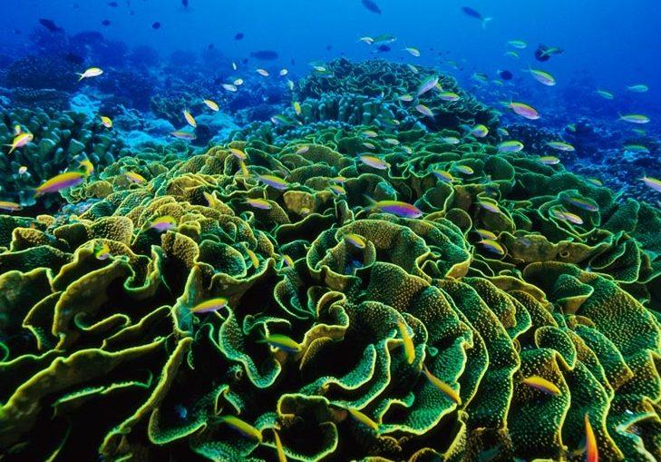 coral Коралов калций срещу остеопороза