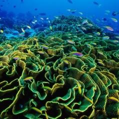 Коралов калций срещу остеопороза