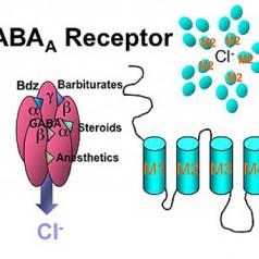 GABA – функции и ефект