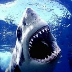 Хрущял от Акула